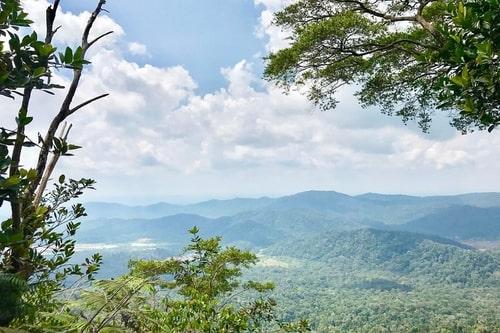 Gunung Panti hiking