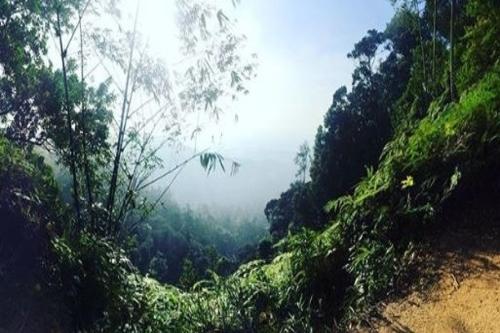 Gunung Pulai hiking