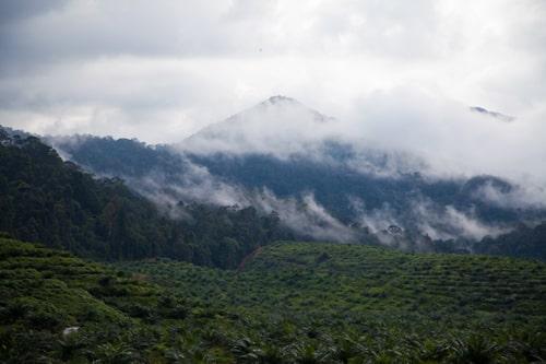 Gunung Belumut hiking